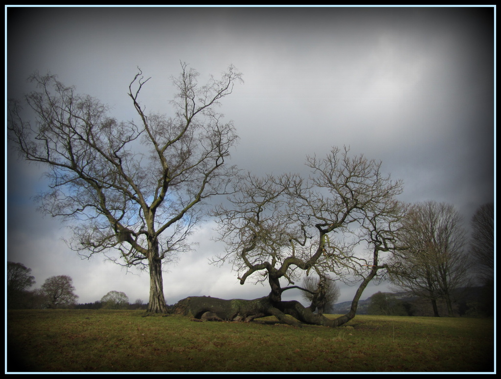 Winter trees by busylady