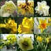 'yellow' by quietpurplehaze