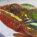 Chameleon by filsie65