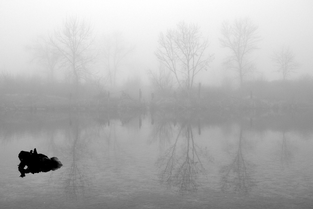 In the Fog by pflaume