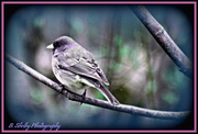 7th Feb 2013 - Out on a limb