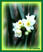 14th Feb 2013 - First Sign of Spring