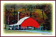 17th Feb 2013 - Red Barn-2013