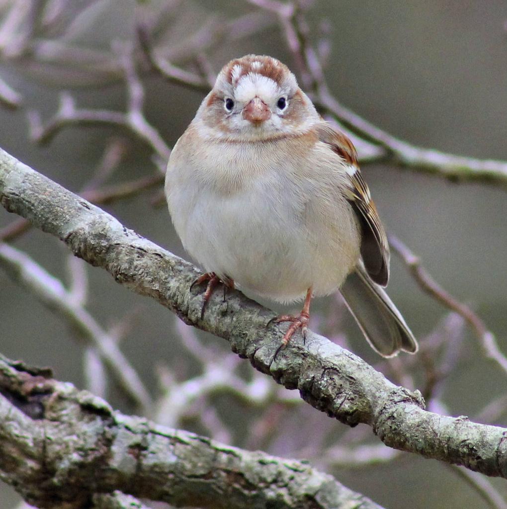 Special little bird by cjwhite