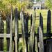 Pieux Fence by eudora