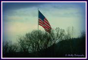 19th Feb 2013 - Long May She Wave