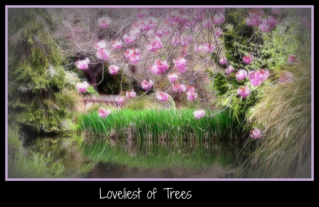 Loveliest of Trees by maggiemae