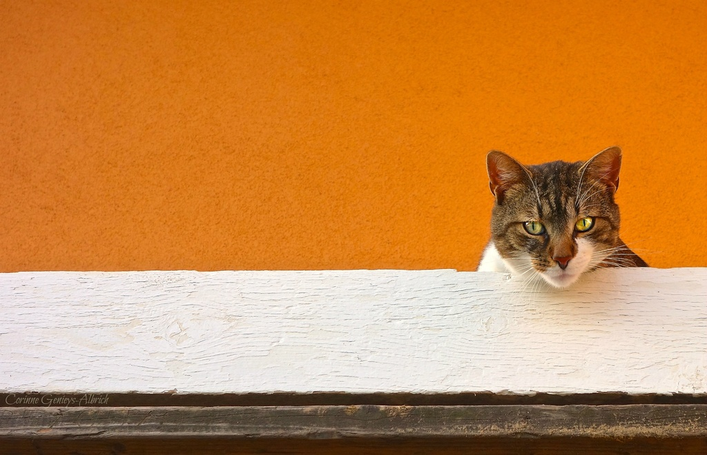 I'm watching you... by cocobella