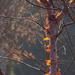 Paper bark glow and beyond by dulciknit
