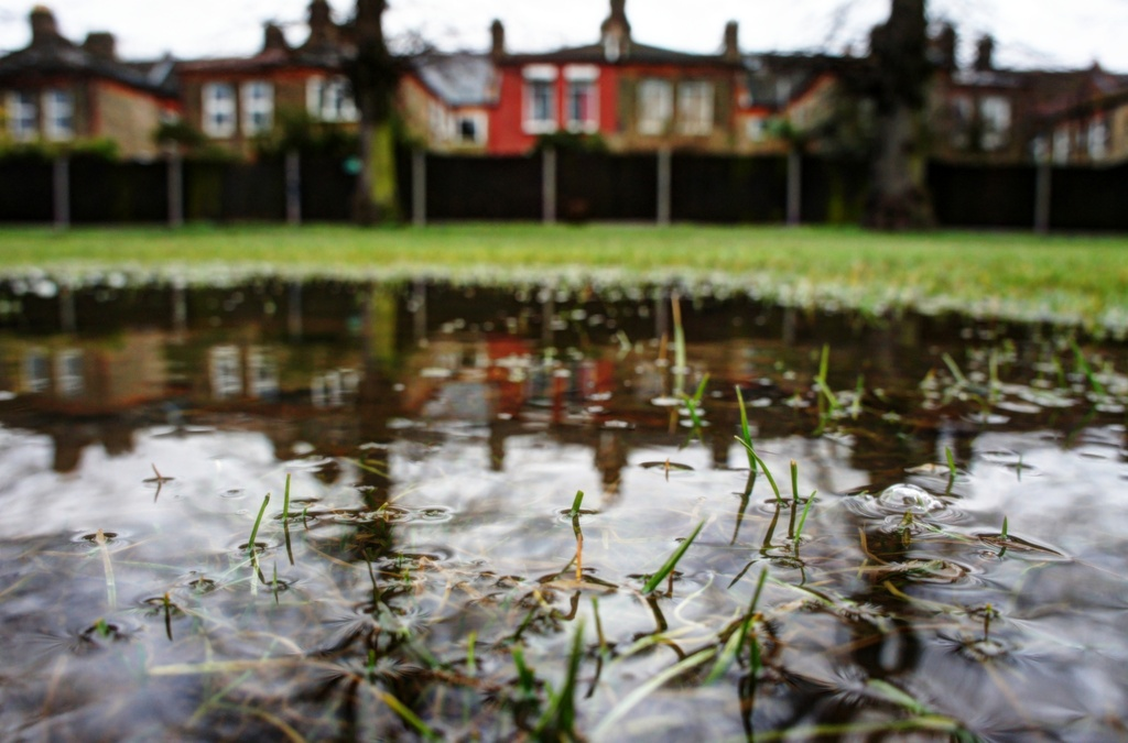 Wet grass by boxplayer