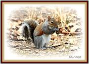 23rd Feb 2013 - Squirrel