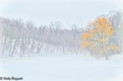 7th Mar 2011 - Foggy Ridge Run yellow tree