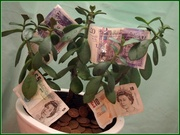 12th Mar 2013 - Money doesn't grow on trees!