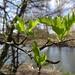 New leaves - 12-3 by barrowlane