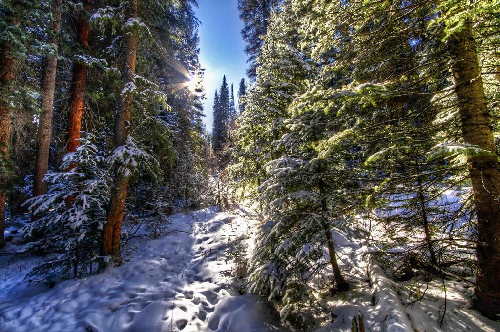 Take a Walk in the Woods by exposure4u