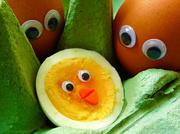 13th Mar 2013 - Eggspanding the family.