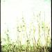 weed by ingrid2101