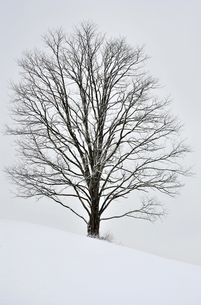 Winter One Tree Hill by alophoto