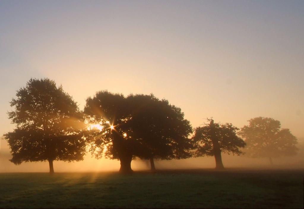 Fine But Misty Morning by netkonnexion