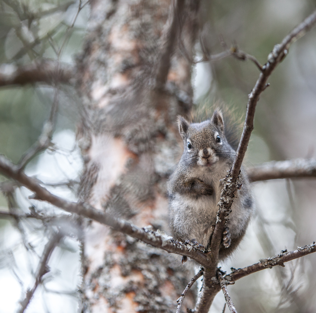 Happy Squirrel by grizzlysghost