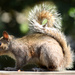 S is for Squirrel by wendyhgill
