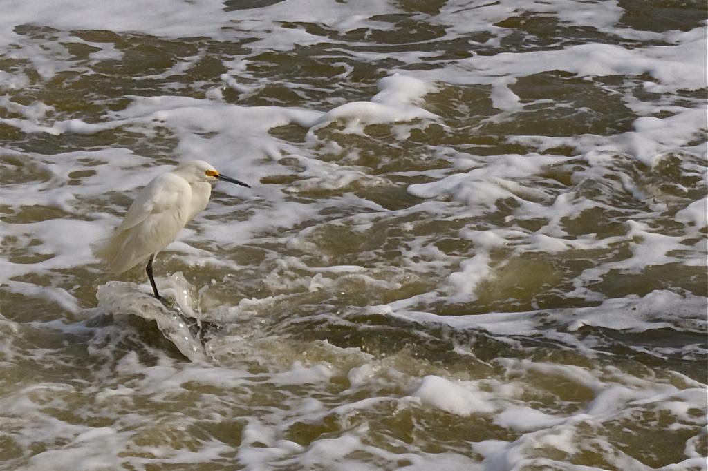 Go fish by riverlandphotos