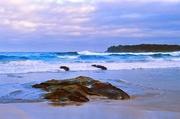 21st Mar 2013 - Jones Beach