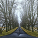 Day 81:  Locust Lane by lisabell