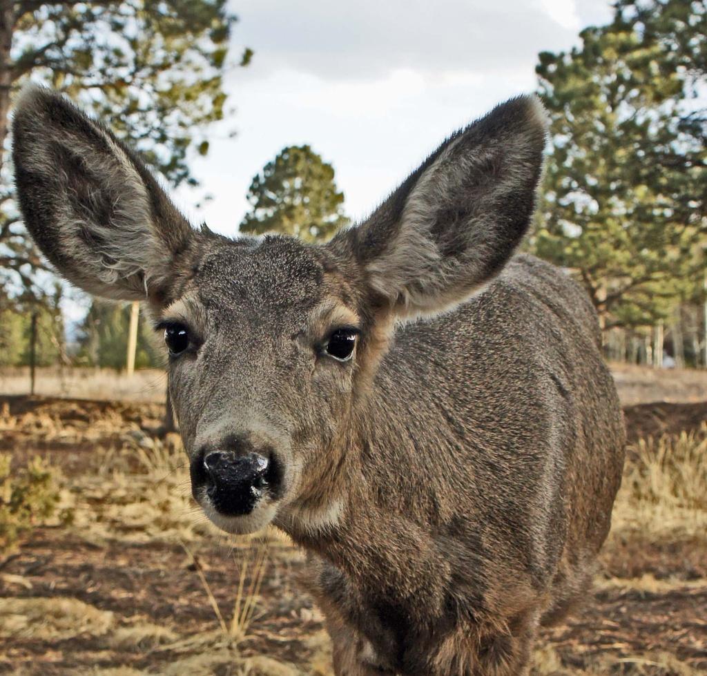 more deer by dmdfday