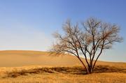 23rd Mar 2013 - Lone Tree