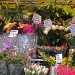 Flower Stall by helenmoss