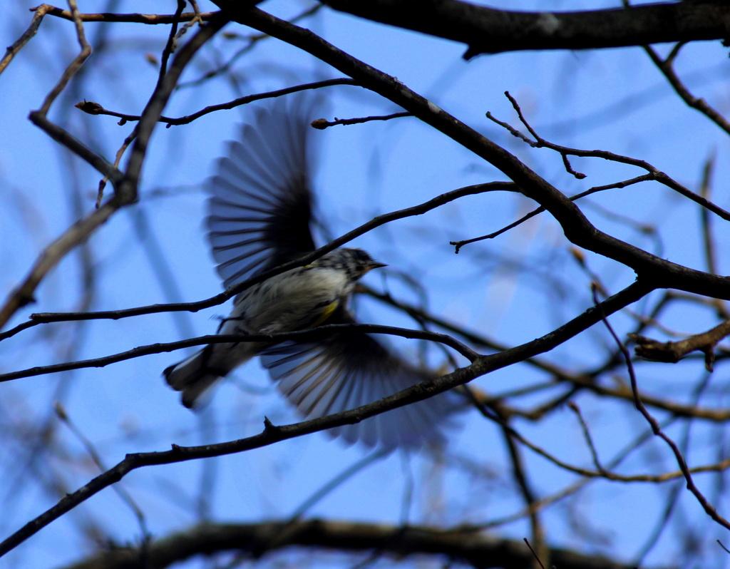 Bird in flight by tara11