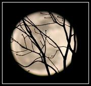27th Mar 2013 - Moon Silhouette