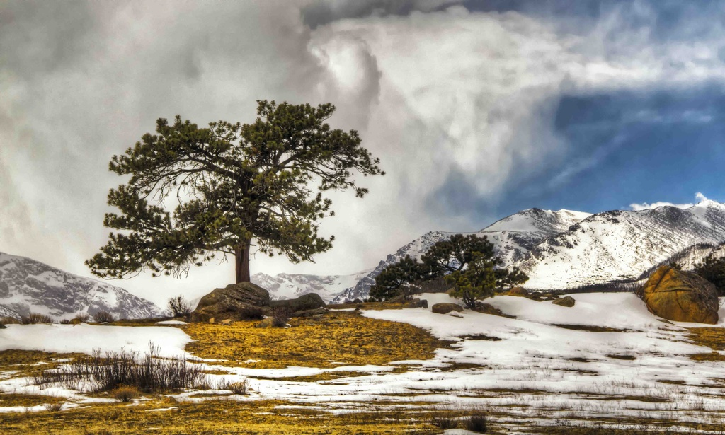 Lone Tree in the Wilderness by exposure4u