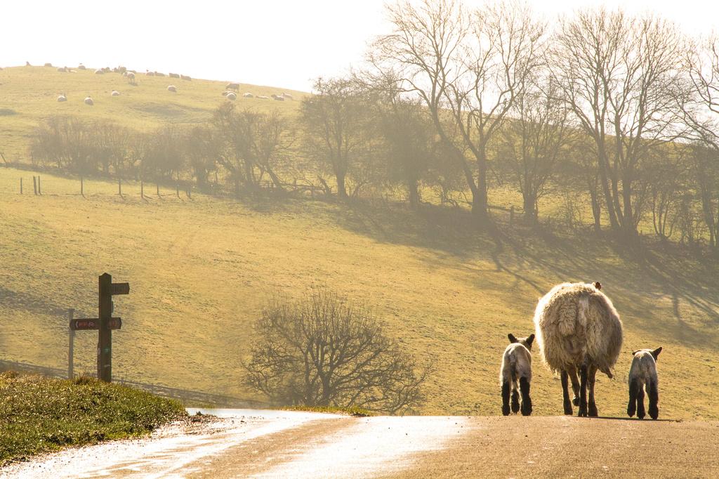rural traffic by jantan