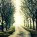 Drive into the Haze by cindymc