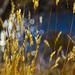 Wild grass by abhijit