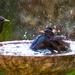bath time 2 by peadar
