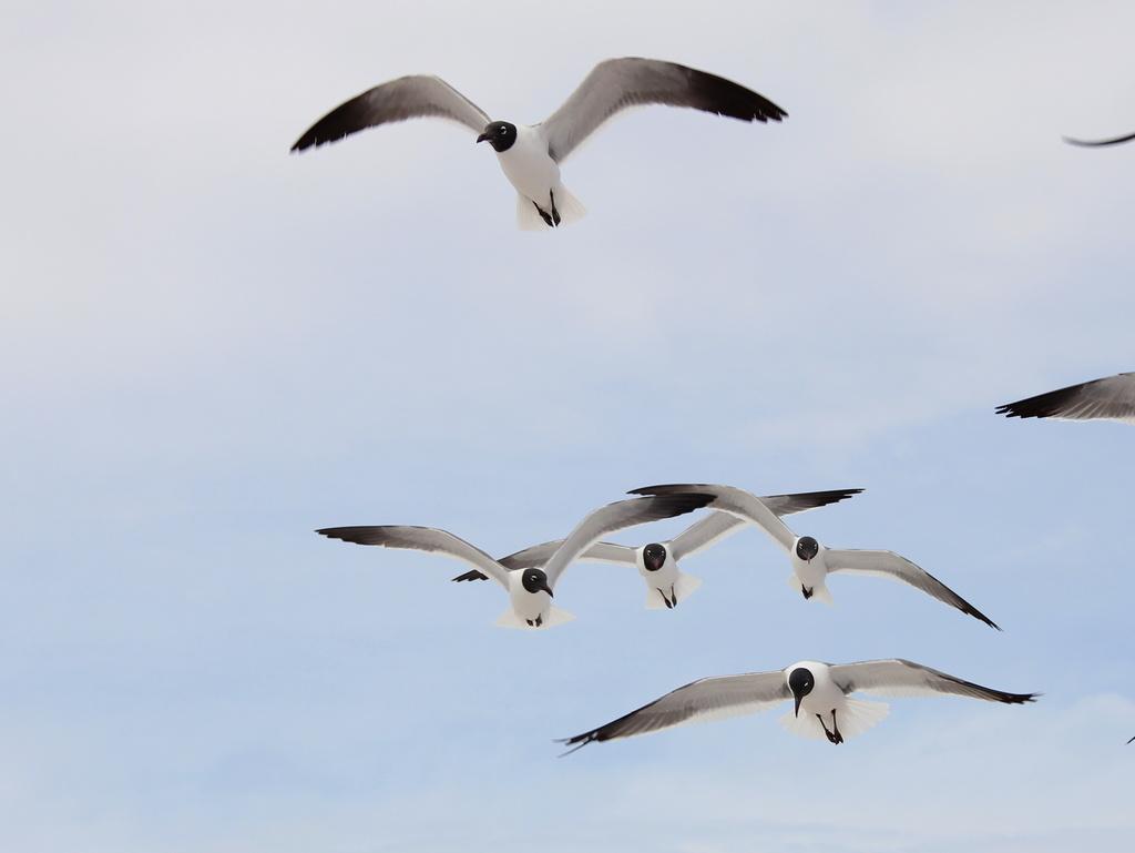 Flock of Seagulls by tara11