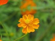 13th Aug 2010 - flower