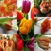 March tulips in April  by quietpurplehaze