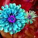 Blue Zinnia by stownsend