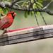 My little bird friend by cjwhite