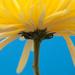 14.4.13 Burst of Sunshine by stoat