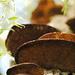 Mushroom Stairway by alophoto