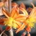 Petals, Seeds and Fluff by pasadenarose