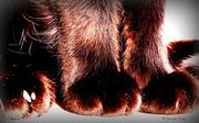 16th Apr 2013 - Fuzzy feet.