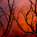 Burnt copper by abhijit