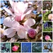 Spring is here!! by nicolaeastwood