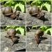 Killer Snail by bulldog